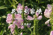 刘家峡黄河河堤已变花海,各种花朵五彩斑斓,赏花游客络绎不绝