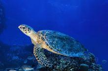 畅游海底世界,爽爽的感觉,赞