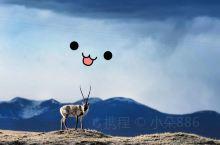 """邂逅""""生命禁区""""可可西里  青海可可西里国家级自然保护区位于青海省玉树藏族自治州西部,总面积450"""