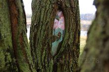 手绘墙也可以画在树上的,也许未来我们的眼里都是美的东西