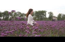 中国的普罗旺斯  薰衣草的花语是等待爱情,提到薰衣草,你一定会想到普罗旺斯令人沉醉的紫色花田。  几