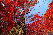 关门山大峡谷 关门山包括关门山森林公园、关门山大峡谷、关山湖景区。看枫叶大家都会去关门山森林公园,实