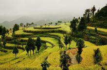茗岙,位于浙南永嘉山区四周海拔800多米高的大山之中。经历1000多年历朝历代的耕作,茗岙的梯田已是