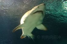 上海海洋水族馆 半日游