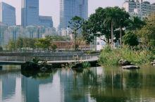 香蜜公园 公园很大,但是超级贴心的分了不同区域,有玫瑰园荔枝林,花香湖花蜜湖,每个区域重点不同又包罗
