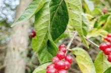 秋色红豆相思意,重游旧地再念心。