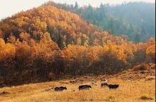 北山地质公园