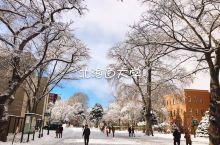 札幌 之【北海道大学】   北海道大学除了实力,颜值也在线,被评为日本最美校园之一。我好像很爱去学校