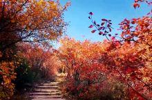 舞彩浅山步道位于顺义区东北部浅山区,是北京小众的赏红叶的打卡地之一,景色堪比香山,却没有香山那样人山