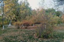 新疆克拉玛依的秋景