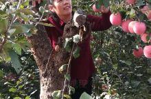 采摘苹果!