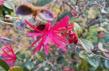 初冬时节,你能想象这鲜花盛开的地方不是南方小镇,而是我们的北方小城!