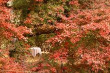 #莫干山风景区##住在老别墅里# 感觉整个莫干山都在等它红透,每日都有人打电话来询问进度,见证过整个