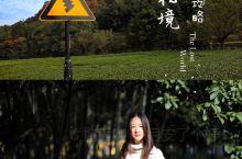 杭州|茶田秘境,解锁小众景点拍照攻略!  抽一天时间,好好的逛了梅岭南路,从云栖竹径一直到上天竺,这