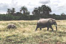 喜欢坦桑是愿意像野兽一样寻找自我的存在… 离开坦桑最美的山顶酒店,塞伦盖蒂游猎之旅正式开启 手机随拍
