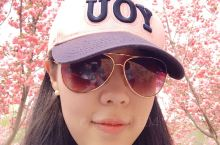 【目的地攻略】坐标大连旅顺龙王塘樱花园 行前准备:樱花开放花期较短,大概每年四月中旬到五月初,出行前