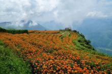 这是中国独一无二的喀斯特山水田园风光,世间罕见!  这里有瑰丽多姿的钟乳石溶洞,有牛羊满山坡、青山间