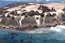 南非海豹岛(Duiker Island)是一座位于豪特湾(Hout Bay)上的小岛,因岛上为数众多