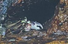 礁石缝里的寄居蟹