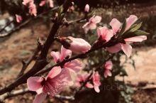 隆昌·内江 万物复苏的季节,一切都是最好的安排!! 隆昌·内江