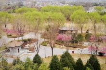 三月春分,黄土高原嫩柳摇绿,蕊花泛红,太史公祠一游。 司马迁祠东临黄河,西枕梁山,始建于西晋,祠北百