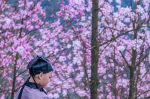 sᴘʀɪɴɢ ɪs ᴄᴏᴍɪɴɢ   春来不看花,便辜负了整个春天。 趁九皇山花溪景辛夷花开得热烈,