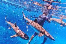 """【地点】:斐济·夸塔岛  在这里和""""鲨鱼""""共舞之后,又一成就达成了。  【特色】 选择来斐济的最重要"""