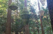 这片林子怎么都逛不够,从地面游玩到空中漫步,走到树上步到最高点的时候,有点小害怕。这里是个天然氧巴,