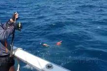 泰国海钓 普吉岛·普吉府 掉到东星斑了