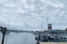 打卡洛杉矶纽波特海滩观鲸游,值得一去的体验!船出海约20分钟,即可看到白肚皮的短吻真海豚成群结队,时