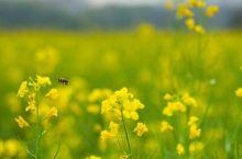 天气静静暖和了,赏花的季节又来临了,出去走走看看田园里的风景也是格外的清新!放飞自我感受大自然气息美