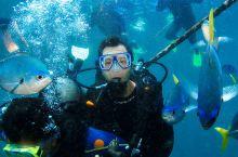 澳大利亚哈迪大堡礁潜水 哈迪大堡礁(Hardy Reef)位于艾尔利海滩(Airlie Beach)