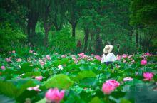 """苏式夏天,我""""荷""""你相约!炎炎夏日,唯有放眼望去的满池绿荷红花,能让人心旷神怡,倍感清凉!推迟了的江"""
