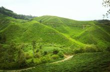 爱喝茶的人千万不要放过这里——BOH茶园  马来西亚对中国大陆公民推出政策十分诱人,出行的便利也让我