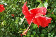 云南孟连 雨后的花儿格外美