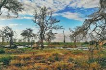 安博塞利国家公园除了是大象🐘的乐园,雨水充沛的季节景色也美得不可方物,美得斑斓、美得惊艳、美得磅礴、