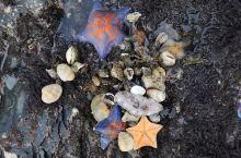 如果你想更好的感受大连金石滩的美丽风光,那你一定要选择徒步进去景区,大自然一定会让你不枉此行的,金石