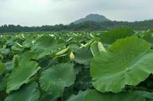 邛崃火井镇是个养身的好地方,空气清新,没有污染…待开发的一个古镇