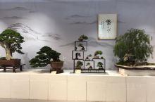 北京世园会—国际馆盆景展区