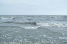 兴凯湖,大白鱼