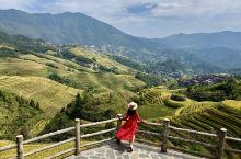 站在桂林龙脊的金坑梯田旁,清晨时看着远山、金色的梯田和美丽安静的寨子,说不出的舒服。很快原来安静的寨