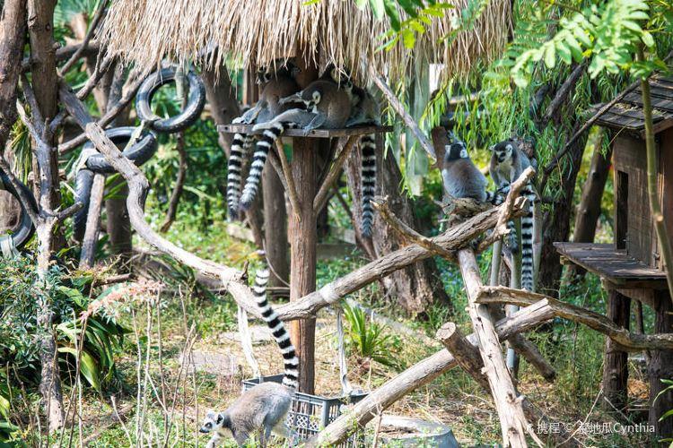 Hongshan Forest Zoo4