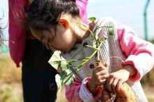 在奥伦达部落•原乡,打动人的不只是苍峦群峰、蓝天白云、繁星满天,还有各种各样能让你回归自然的有机蔬菜