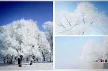 这个冬天来东北 穿越最具挑战的羊草山;玩最深最厚的雪 ;体验最浓厚的东北渔猎文化 ;坐最刺激的镜泊湖