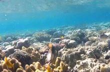 海底世界的美妙之处