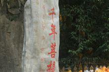 #寻梦,巴拉格宗千年菩提树#  巴拉格宗,这片香格里拉的江南之地,是很多热爱香格里拉这片圣土的心灵