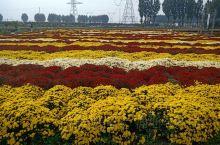 金秋之季,重阳宫偶遇菊花的海洋。