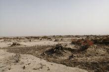 塔拉干沙漠公路,从沙雅胡杨林公园至359旅兵团纪念馆全程4个多小时,一路上都是一望无际的沙漠,没有任