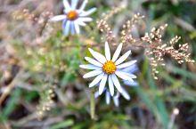 不是花中偏爱菊,此花开尽更无花