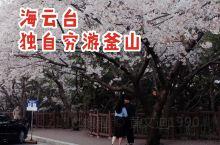 #独自穷游第6天 我来到了釜山著名的旅游圣地 海云台 美丽的海岸线 沿岸是开得正灿烂的樱花 这里的人